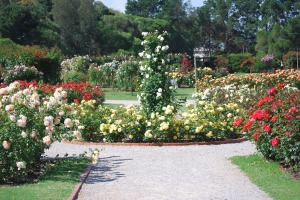 Rose Garden, Werribee, Australia. Photograph by Robert Lynch. License: Public Domain Dedication.